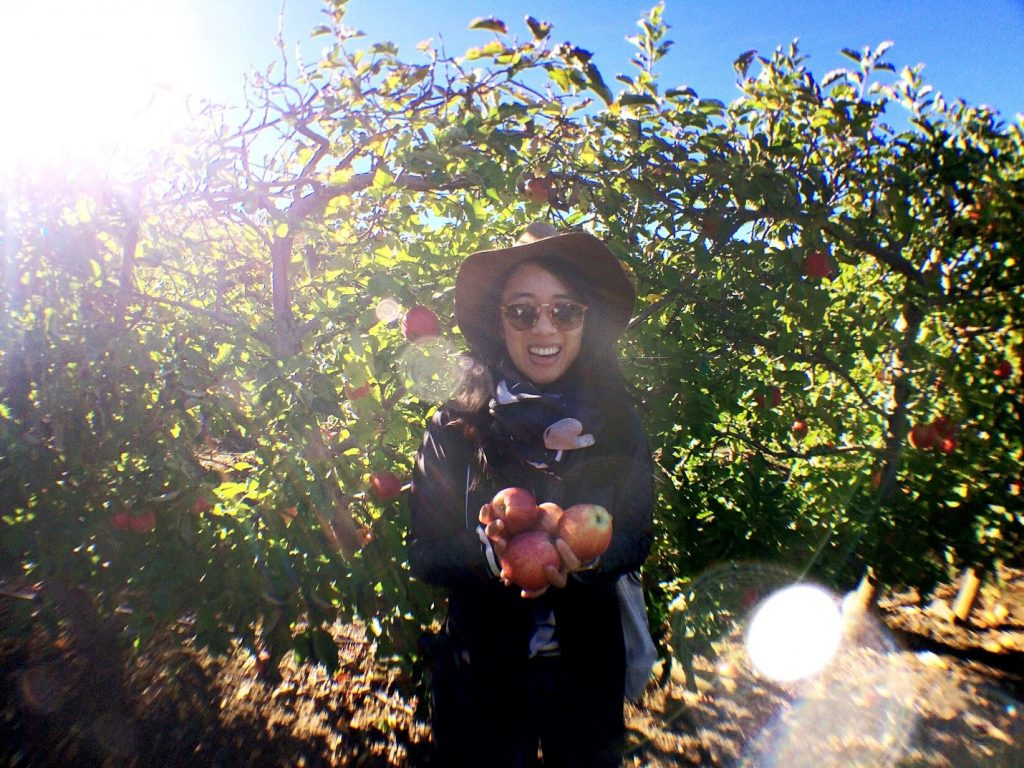 apple-orchard