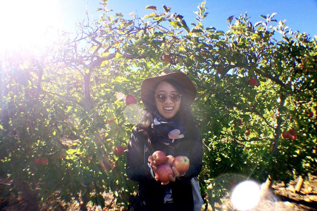 Best farms and restaurants Granby: apple picking