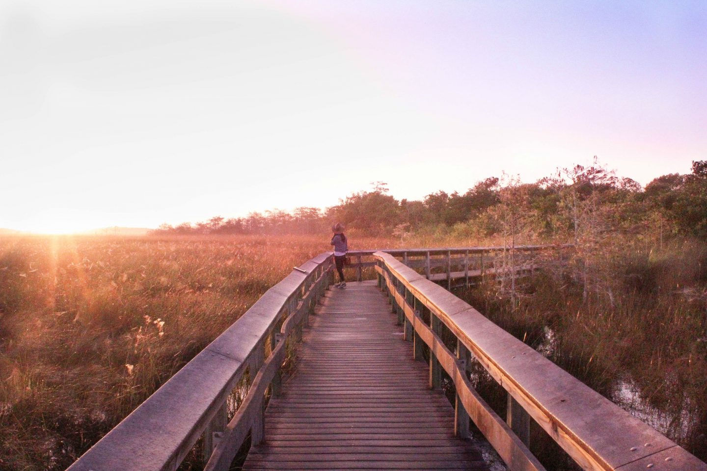 Top 5 must have experiences in the Everglades