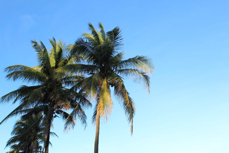 Miami travel guide palm trees blue