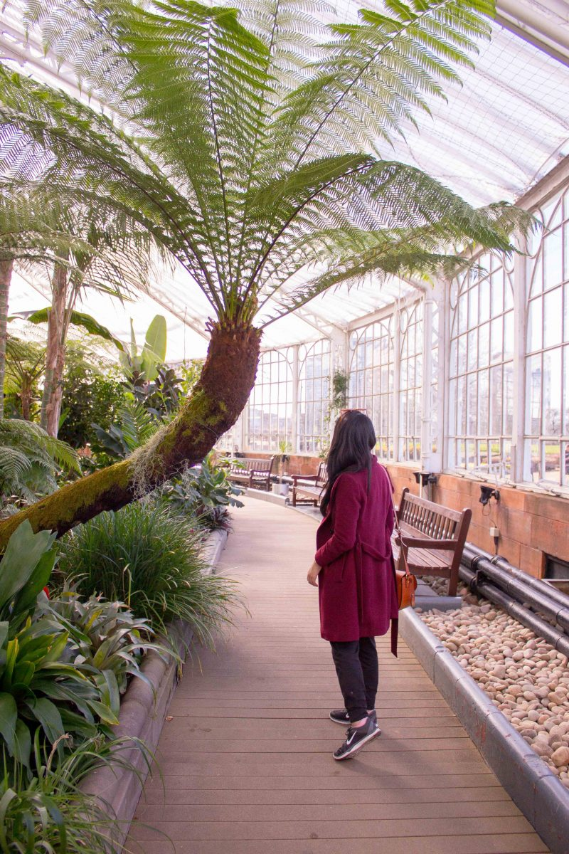 Free things to do in Glasgow - winter garden
