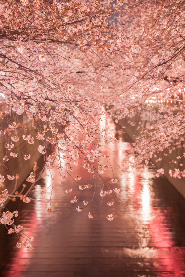 Japan packing list cherry blossoms