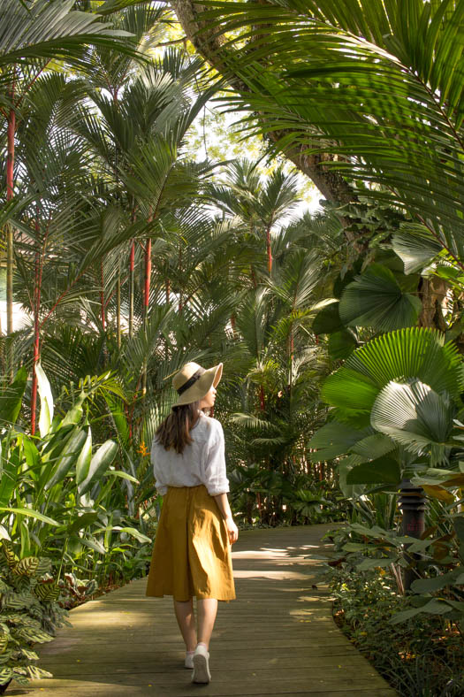 free things to do in singapore - singapore botanic gardens