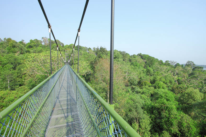 singapore off the beaten path - treetop walk