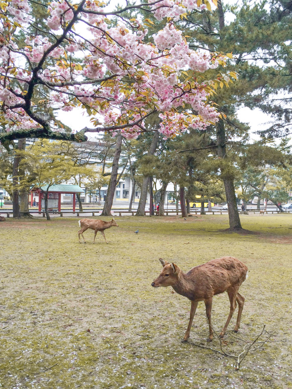 things to know before going to Japan - nara