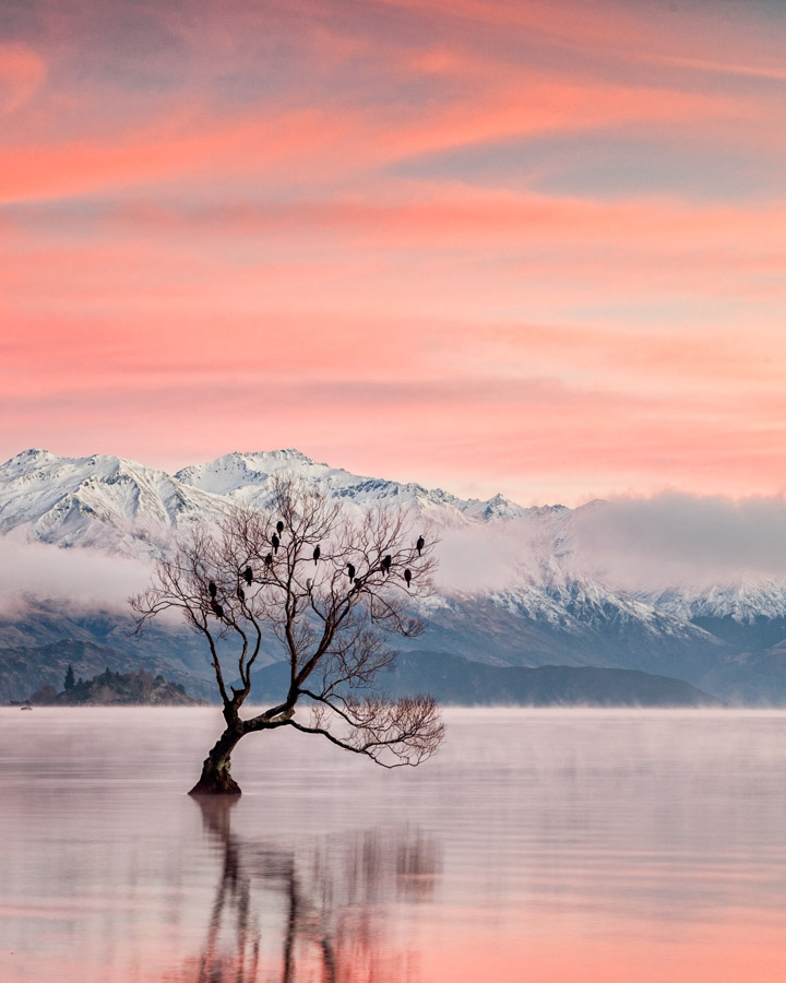 Instagram spots in New Zealand's South Island - That Wanaka Tree