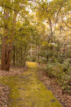 Things to do in Jervis Bay in Winter - Botanical Gardens