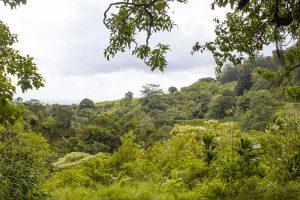 3 day Maui itinerary - road to hana view