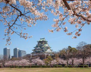 Bucket list experiences Japan - Cherry Blossoms