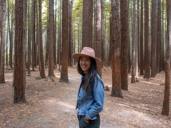 New Zealand North island itinerary - Redwoods Forest